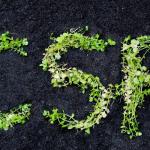 CSR in 2021
